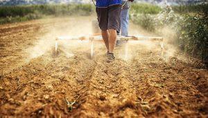 8 причини да предпочетете локалната храна